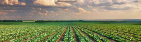 Op zoek naar nieuwe verzendverpakkingen voor de agrofoodsector